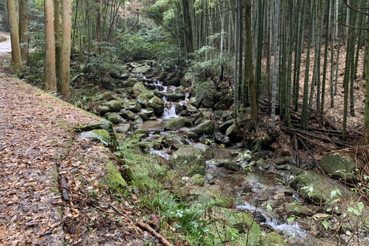 井原山登山